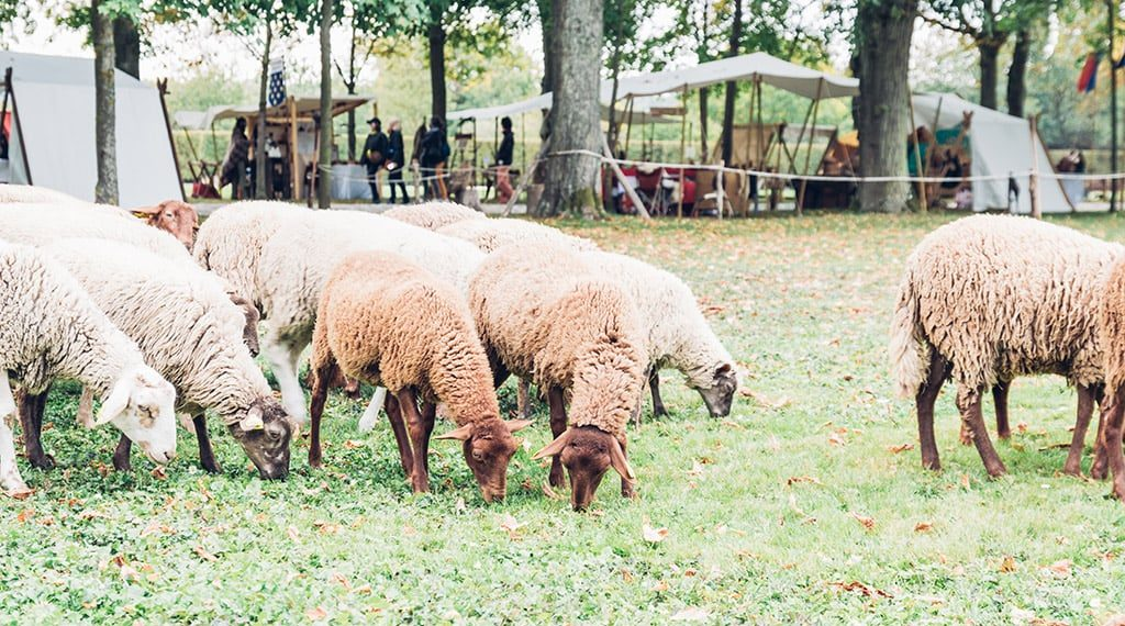 Trictracteambuilding-fetes_medievales_moutons2